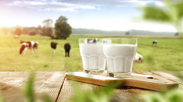Synlait Milk director of operations resigns